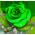 GreenRose p