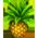 Pineapple p