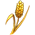 Wheat p