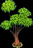 EucalyptusTree