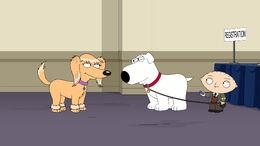 Boy Dog Meets Girl Dog