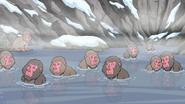 Macaque Springs