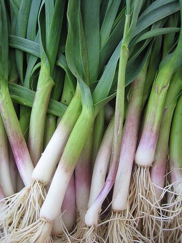 File:Green garlic.jpg