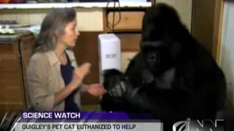 Scientists Successfully Teach Gorilla It Will Die Someday