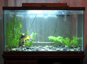 Fish-tank-1 11 11-web