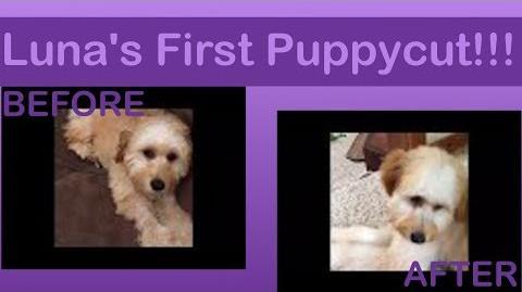 Luna's First Puppycut!!!
