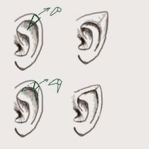 Uitleg tekening earpointing shaping