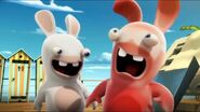 Rabbid got sun burned