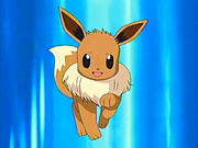 May Eevee pokemon anime