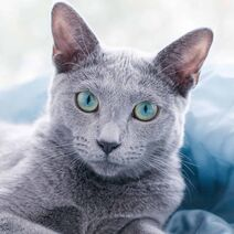 Grey-cat-names-featured-image