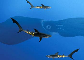 Sharkopaths and rainbow squid