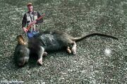 Hunter-with-a-Giant-Mouse
