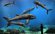 World's Largest Aquarium with Leedsichthys