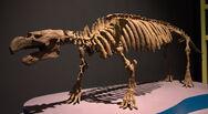 Dans l'ombre des dinosaures - Pezosiren - 016