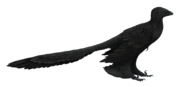 Microraptor SciiFii