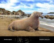 Pontolis-magnus-2015-738x591