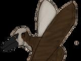 Flying Dylanus
