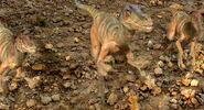 Arid Velociraptor