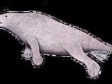 Rodhocetus (SciiFii)