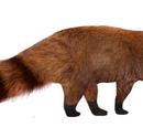 Pantheroon