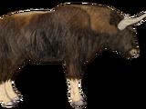 Antarctican Bison