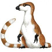 Sinosauropteryx SciiFii
