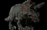 Triceratus restoration