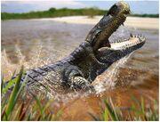 Purussaurus Giant Caiman