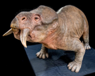 Lystrosaurus (SciiFii)