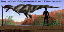Rugops-size