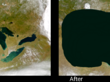 The Great Lake's Whale Disaster