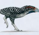 Coyobird