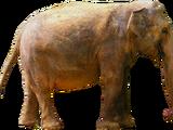 Elephas ekorensis (SciiFii)