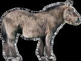 Equus lenensis (SciiFii)