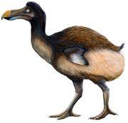 Dodo (SciiFii)