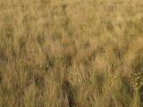 Florida Scrubland (New Pleistocene)