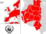World Wildlife Fund (After The Cold War)
