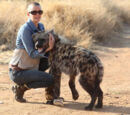 Domestic Hyena