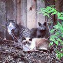 Feralcats