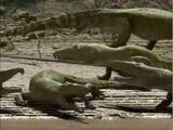 Crocolizard