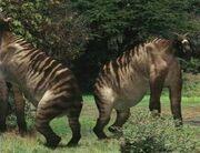 Serengeti Mesoron