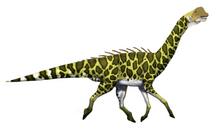 Gracile Sauropod