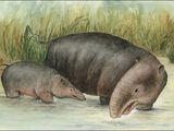 Hippopotamoid