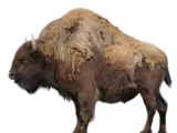 Ancient bison (SciiFii)