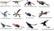 Microraptor species