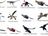 North American Microraptor Disaster