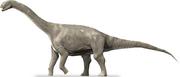 Cetiosaurus (SciiFii)