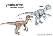 Sorna velociraptors