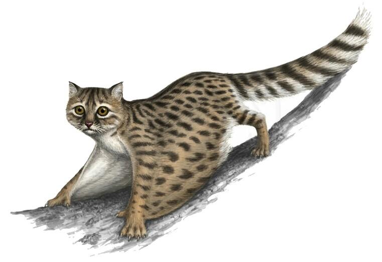 flying cat fanon wiki fandom powered by wikia