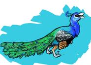 De-Avianed Peacock